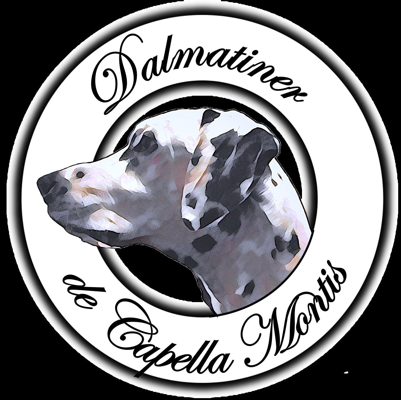 Dalmatian de Capella Montis